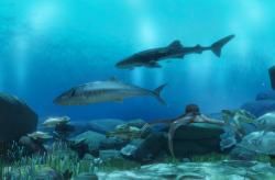 3D場景_海底世界-封面圖
